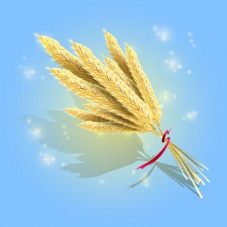 Photo pour Bouquet d'épis de blé mûrs avec ruban rouge, vecteur - image libre de droit