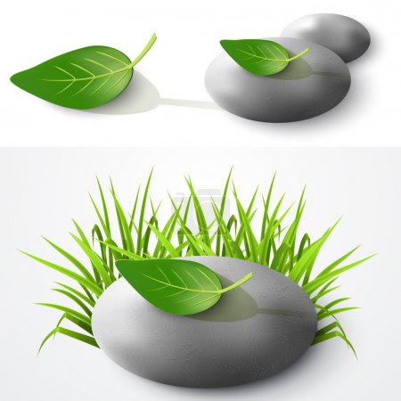 Stone and leaf. Vector illustration