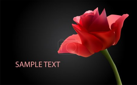 Vector background with red roses.