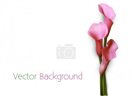 Illustration pour Fond vectoriel avec des fleurs de lys calla rose . - image libre de droit