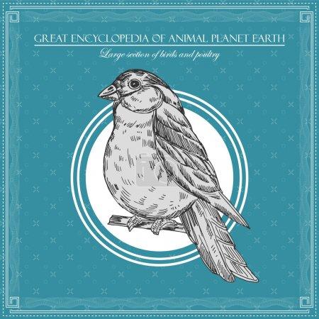 Illustration pour Grande encyclopédie de la planète animale Terre, illustration d'oiseaux vintage - image libre de droit
