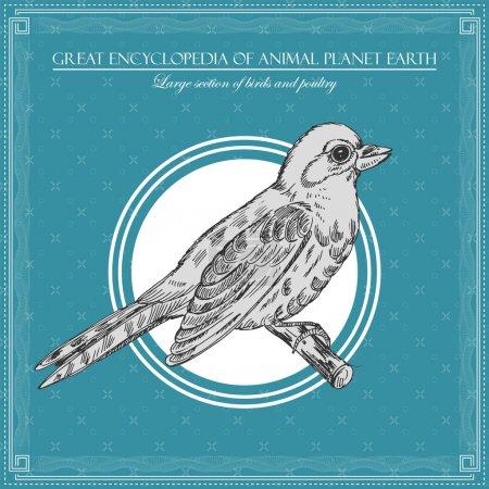 Illustration for Great encyclopedia of animal planet earth, vintage birds illustration - Royalty Free Image