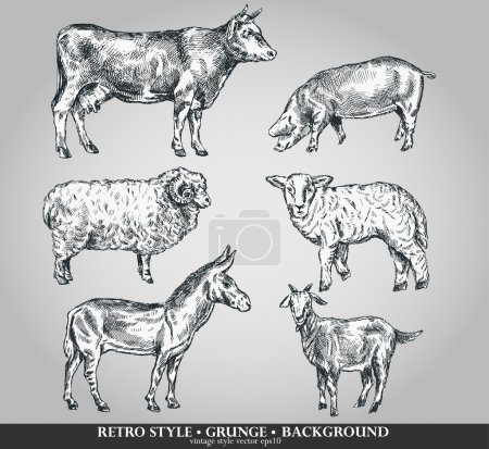 Set of domestic animals cow, sheep, pig, goat, donkey. Vector illustration