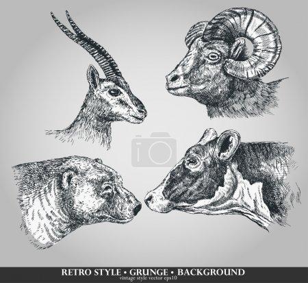 Set of animals cow, sheep, goat, bear. Vector illustration