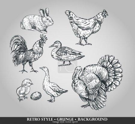 Set of domestic animals cock, hen, turkey, rabbit, duck, goose. Vector illustration