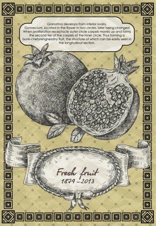Illustration pour Bannière vintage avec grenade. Illustration vectorielle style vintage - image libre de droit