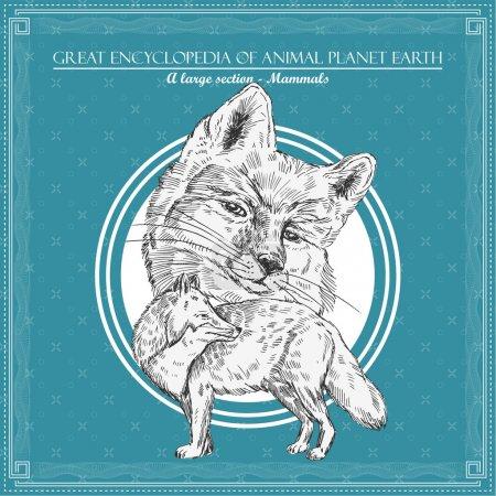 Illustration pour Renard. Illustration pour une grande encyclopédie des animaux - image libre de droit