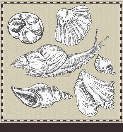 Caracol y conchas. Ilustración de estilo vintage