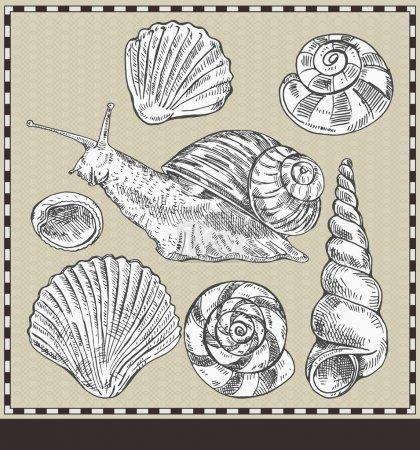 Schnecke und Gehäuse. Illustration im alten Stil