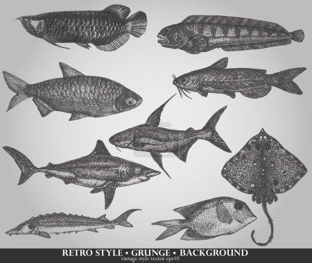 Set of sea fishes. Retro style vector illustration
