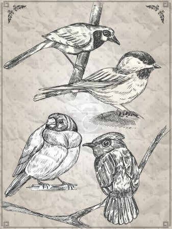 Set of birds. Vector illustration