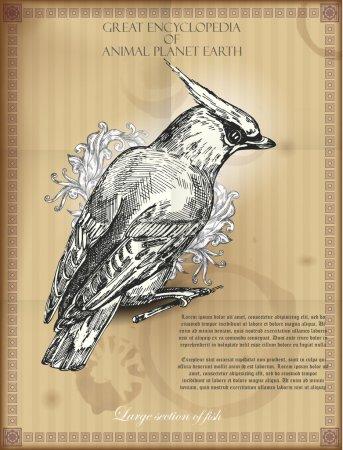 Illustration pour Bohemian Waxwing from Great Encyclopedia of Animal planet Earth. illustration vectorielle rétro - image libre de droit