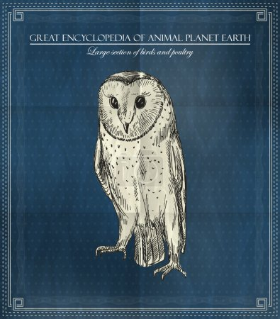 Vector owl from Great Encyclopedia of Animal Planet Earth on blue background