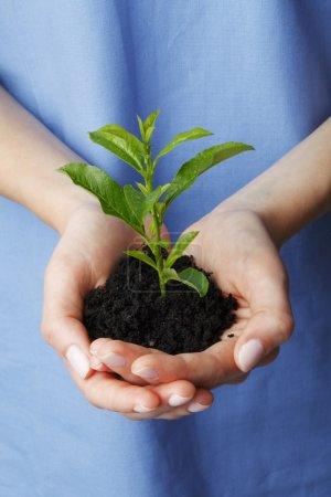 Photo pour Main d'infirmière (médecin) taillée autour d'une plante en croissance. Isolé sur fond blanc . - image libre de droit