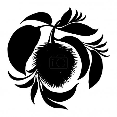 Decorative silhouette soursop with leaves