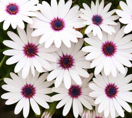 Foto de Algunas flores blancas. - Imagen libre de derechos