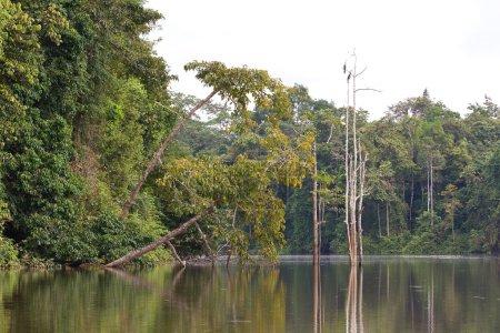 Ox Bow lake, Borneo