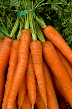 Photo for Some Carrots. - Royalty Free Image