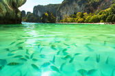 Tropical beach with clear green water and a bunch of fish