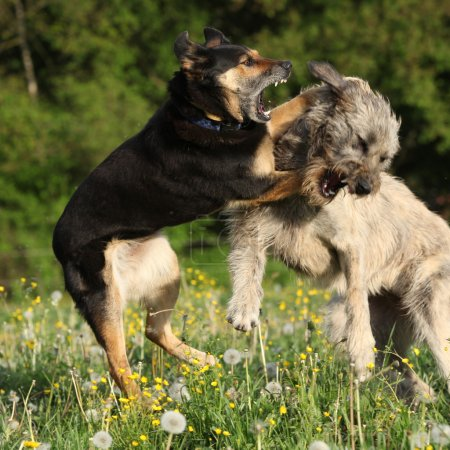 Two dogs fighting with each other