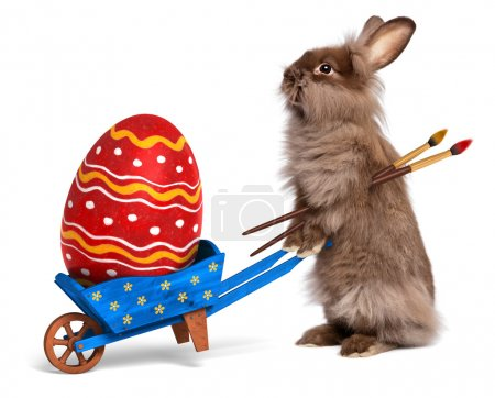 Funny Easter bunny rabbit with a blue wheelbarrow and a red East