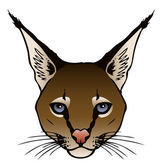 Ink Illustration of a Caracal's head