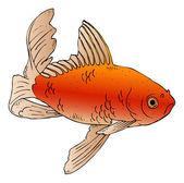 Illustration depicting a goldfish swimming