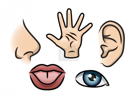 Illustration for A cartoon illustration depicting the 5 senses. Smell, touch, hearing, taste and sight. - Royalty Free Image