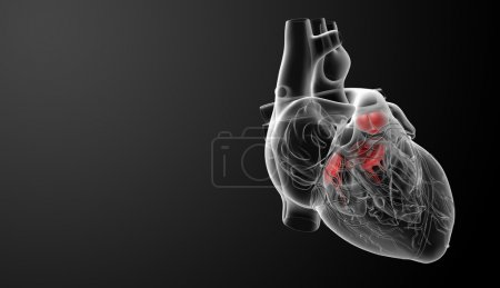 Photo for 3d render Heart valve - side view - Royalty Free Image