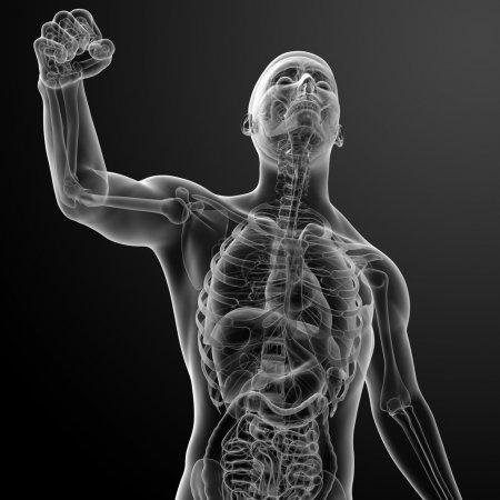 Running human anatomy by X-rays