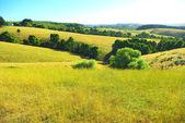Australian landscape in summer