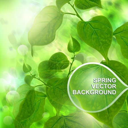 Illustration for Green spring trees background. Vector illustration. - Royalty Free Image
