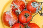 Rotten rajčat