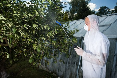 Gardener spraying trees