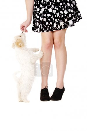 Puppy next to a woman's legs eating a treat