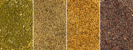 Photo for Backgrounds of malt seeds and dried hops - Royalty Free Image
