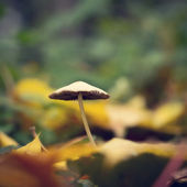 Mushroom vintage background