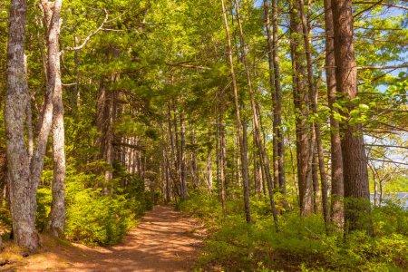 Photo pour Sentier forestier (kejimkujik national park, nova scotia, canada) - image libre de droit