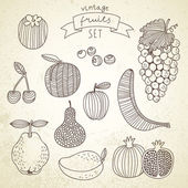 Tasty fruit set in vector