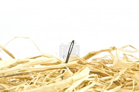Photo for Needle in a haystack concept on white background - Royalty Free Image