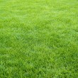 Clean green grass field background as a nature backdrop