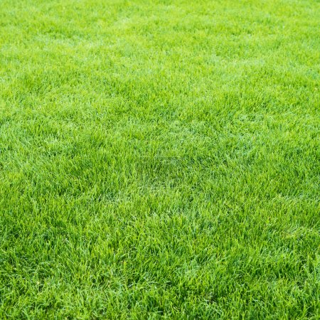 Photo for Clean green grass field background as a nature backdrop - Royalty Free Image