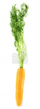 Photo for Peeled carrot with the green top isolated over white background - Royalty Free Image