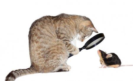 Photo pour Image conceptuelle humoristique d'un chat myope regardant une petite souris à travers une loupe isolée sur du blanc - image libre de droit