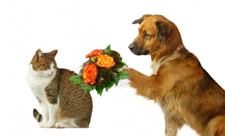 Dog offers flowers to a cat...