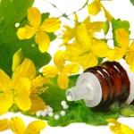 Chelidonium for homeopathy...