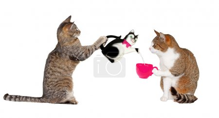 Teatime for Kitty- Cats