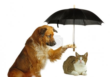 Photo for Dog is protecting a cat with a umbrella , on white background - Royalty Free Image