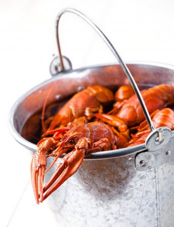 Boiled lobsters in bucket on white background