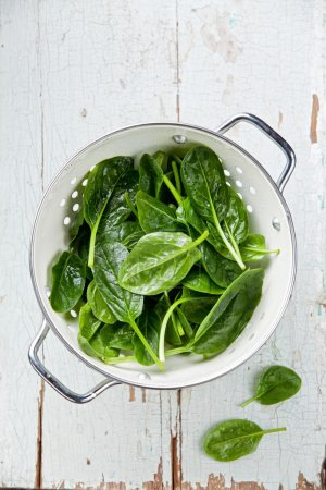 Young spinach in colander